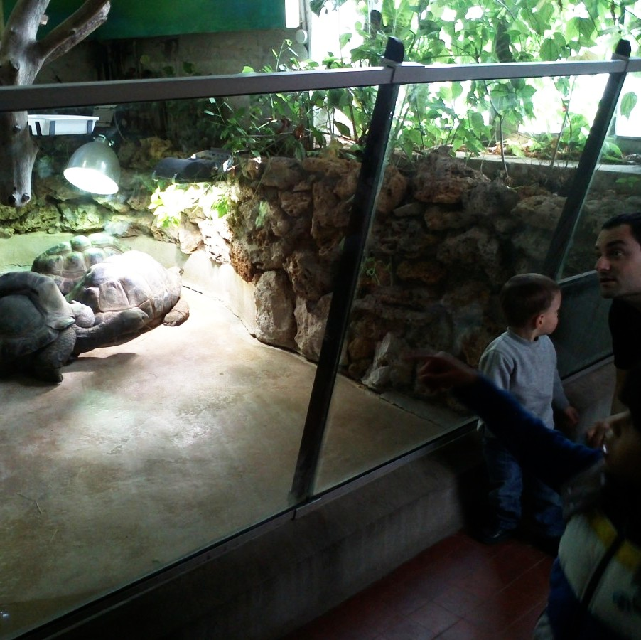 Admiring the Tortoises