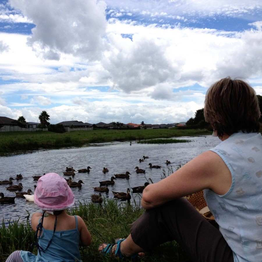 ducks on estuary, papamoa