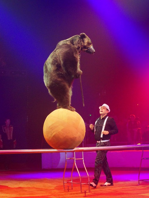 bear on a ball