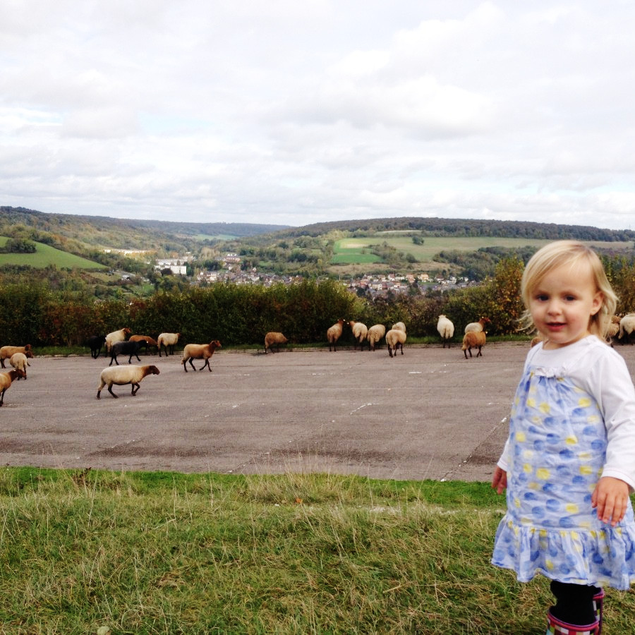 elena and the sheep, near Les Andeleys